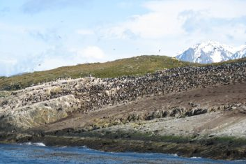 Argentina Patagonia - Beagle kanaal - penguins