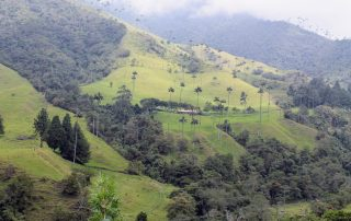 Colombia Koffiedriehoek - Cocora vallei