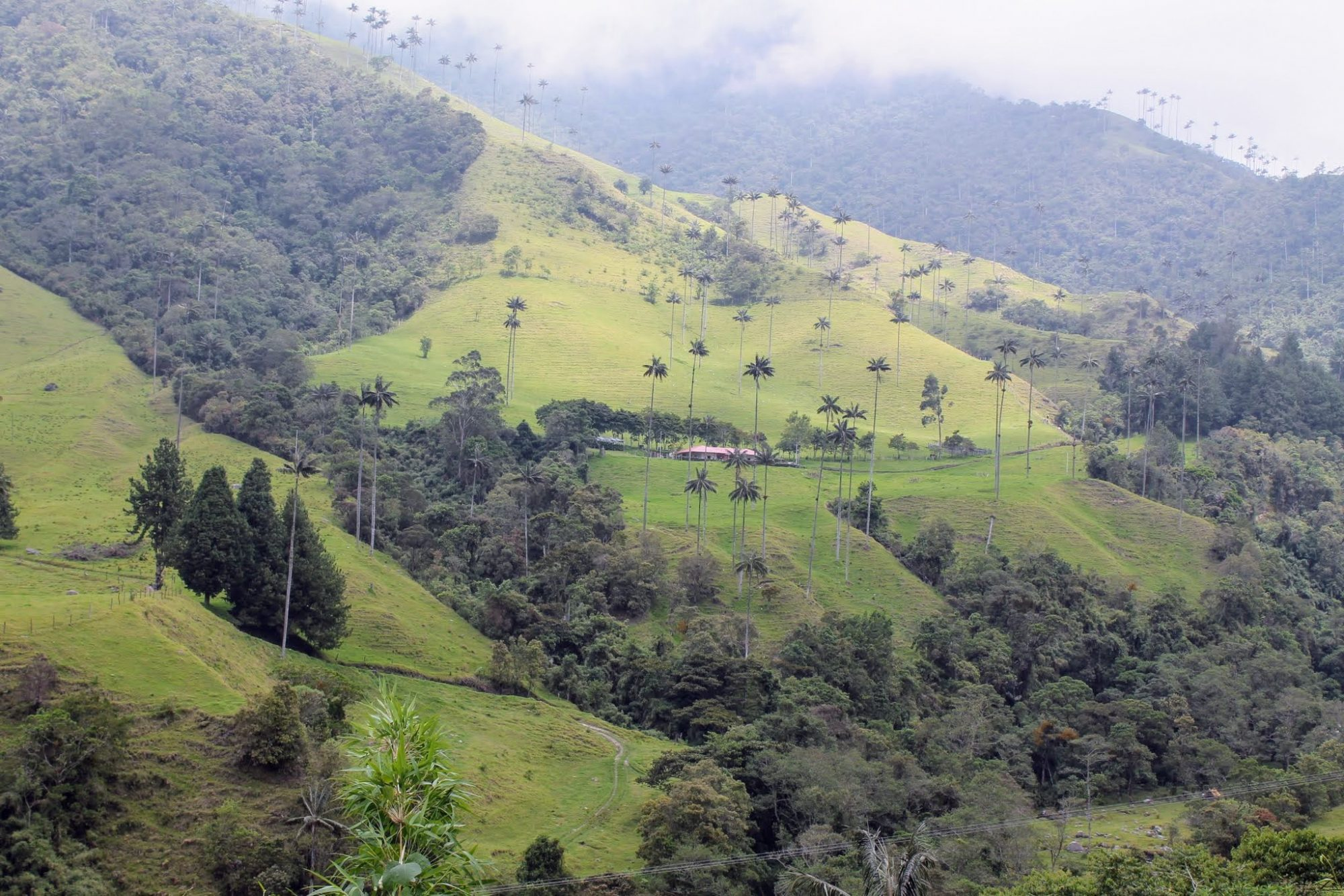 Colombia Koffiedriehoek - Cocora vallei