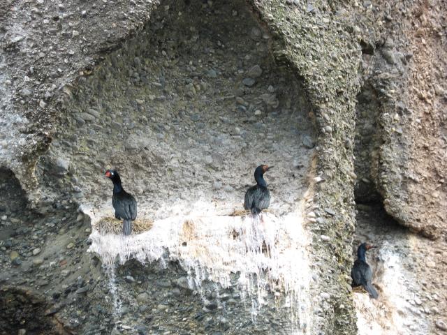 Chile Patagonia - Mare Australis excursions birds