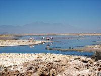 Chili - San Pedro - Salar de Atacama