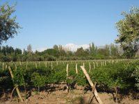 Argentina Mendoza - wineries / wijngaarden