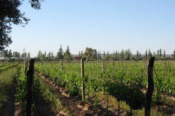 Argentina - Mendoza Wines / wijngaarden