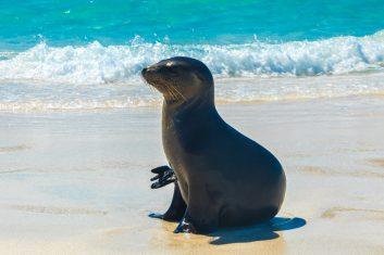 Ecuador Galapagos_Sea lion