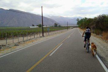 Argentinië Cafayate - fietstocht wijngaarden