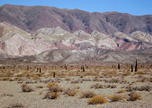 Argentinië Route Cafayate - Cachi. Los Cardones NP