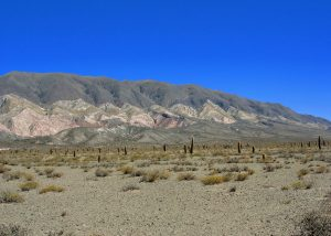 Argentinië Route Cachi - Salta. Cardones NP