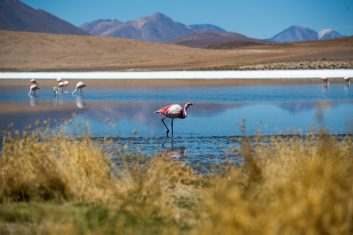 Bolivia Uyuni - flamingo's