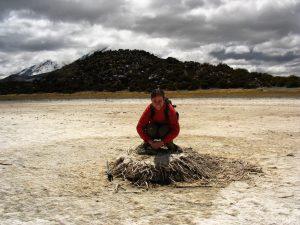 Chile - Noord Putre - NP Lauca - nesting