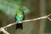 Peru Noord - birdwatching