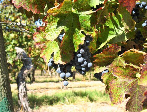Chili en de wijnen