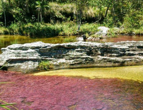 Colombia – Caño Cristales in Serranía de la Macarena