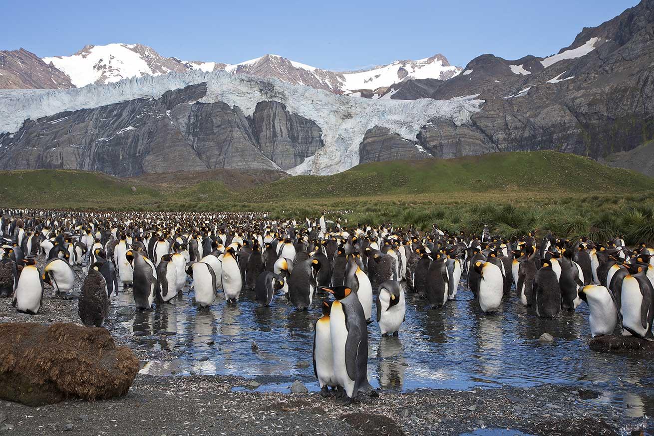 Antarctica - South Georgia pinguins