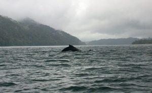 Colombia - Pacific - El Almejal - walvissen