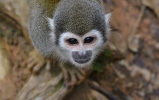 Ecuador_Upper Amazon