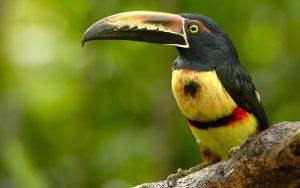 Costa Rica_Sarapiqui