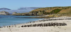 Magellanic Penguins, Falkland Islands_Werner Thiele